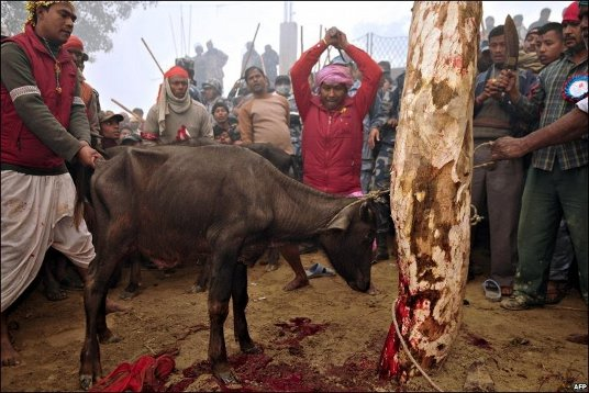 animalSacrifice.jpg